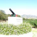 南アフリカワイン訪問記- カノン・コップ(ステレンボッシュ)