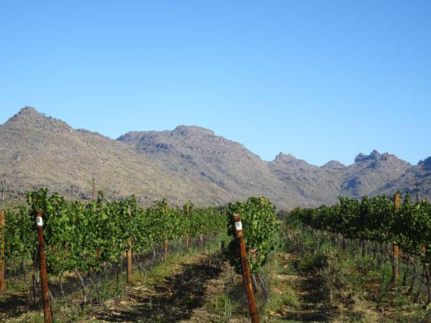 南アフリカワイン訪問記-ドリフック訪問