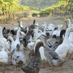 環境に調和したワイン生産と人に優しいワイン造り