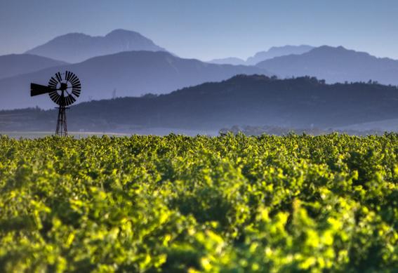 南アフリカワインの選び方