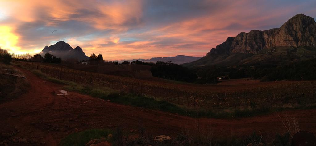 南アフリカワインの魅力